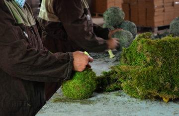 Moss Deco
